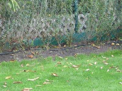 Garten Landschaftsbau Bewaesserungsanlage einbauen