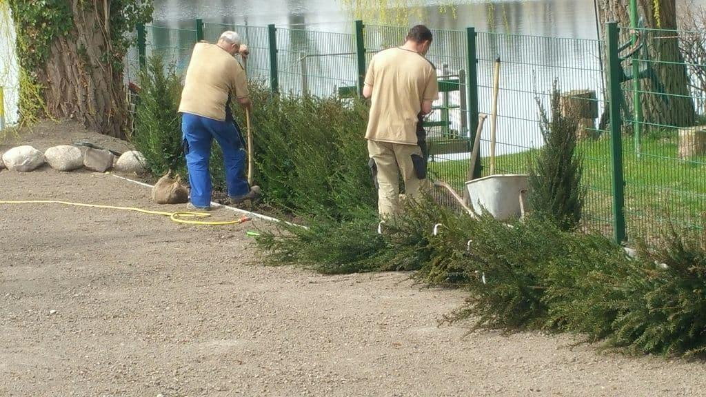 Hecken einpflanzen Werder an der Havel