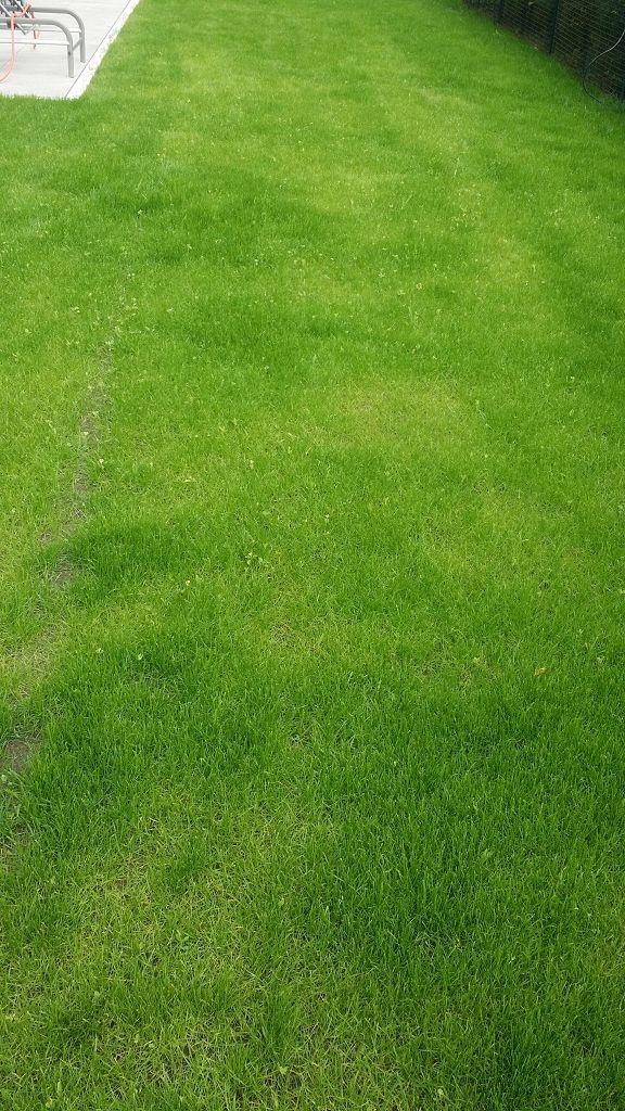 Rollrasen verlegen Werder an der Havel